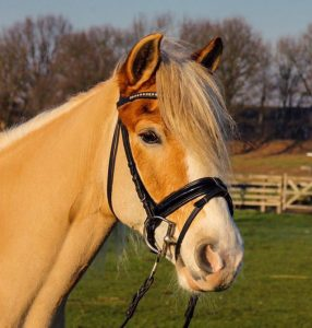 Onze paarden - Bob