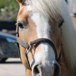 Onze paarden - Fanta