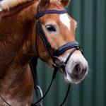 Onze paarden - Karel