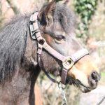 Onze paarden - Pepper