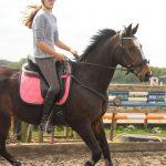 Header paardrijles