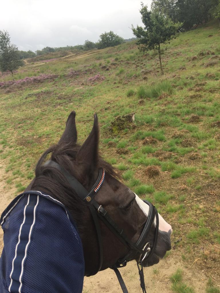 buitenrit te paard